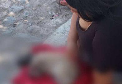 Denuncian envenenamiento de perros en la colonia Cuesta Barrios de Tepic